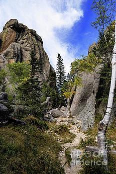 Sylvan Lake Trail  by Carol Bilodeau