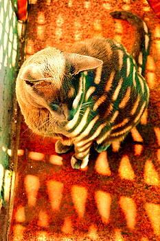 Henryk Gorecki - Tabby cat