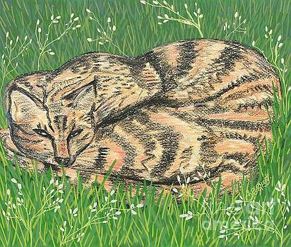 Caroline Street - Tabby in the Grass