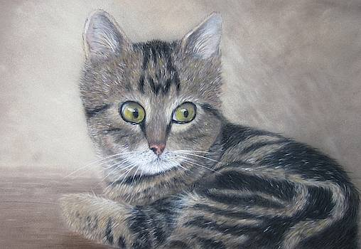 Tabby kitten by Anne Kerr