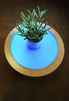 Table with Plant by Bruce IORIO