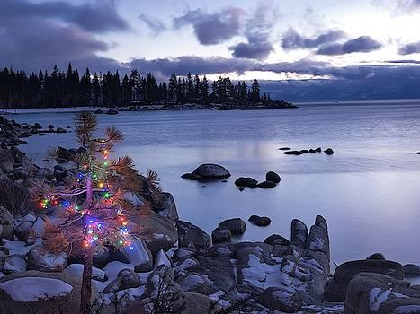 Tahoe Christmas Tree 2 by Martin Gollery