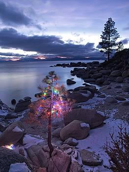 Tahoe Christmas Tree by Martin Gollery