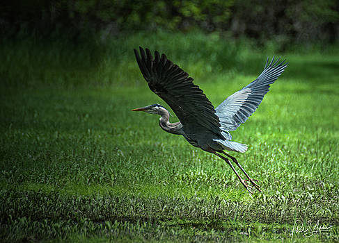 Take Off by Phil S Addis