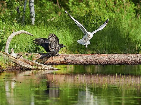 Take your wings somewere else by Jouko Lehto