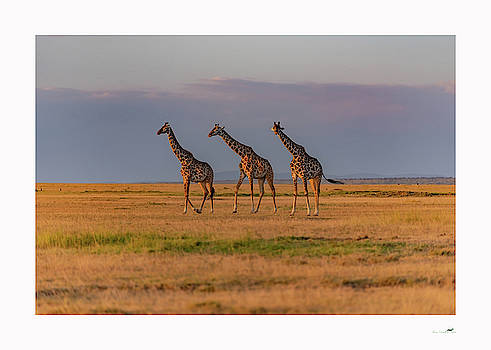 Tall Boys by From Dawn To Dusk Natural History Photography