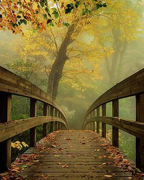Tanawha Trail Blue Ridge Parkway - Foggy Autumn by Mike Koenig