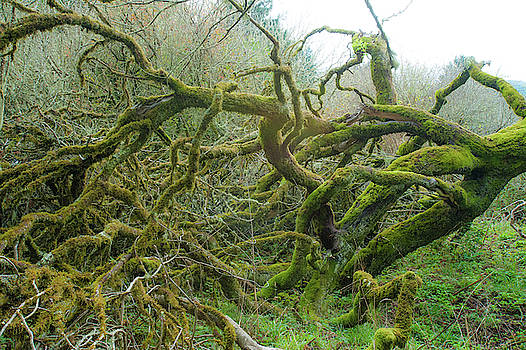 Tangled Moss by Mark Duehmig