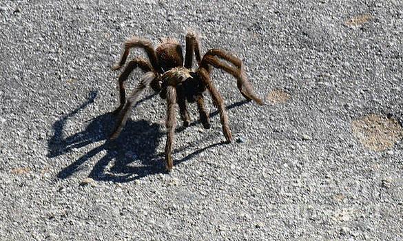 Tarantula by Debby Pueschel