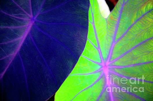 Taro Leaves - Hawaii Plants and Flowers by D Davila