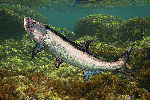 Tarpon of Harbor Club Downs by Spadecaller