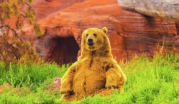 Teddy Bear by Dheeraj Mutha