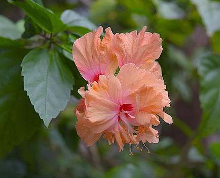 Tender flower by Inessa Williams