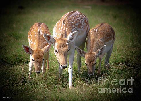 Tennessee Safari Park by Veronica Batterson