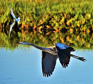 Tern and the Heron by John R Williams