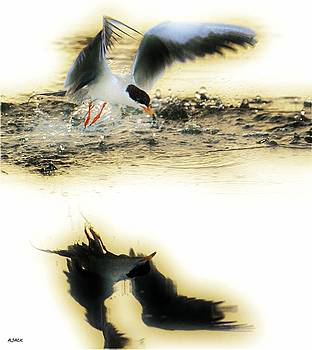 Tern Umbrela by John R Williams