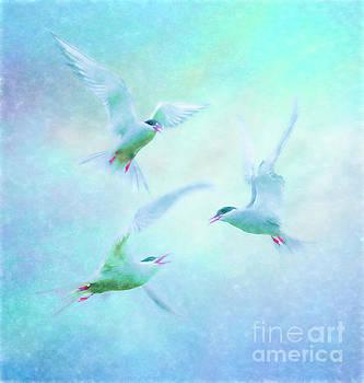Terns squabbling by Brian Tarr