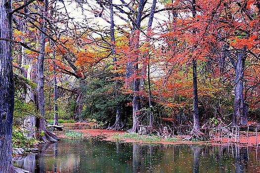 Texas Hill Country 434 by David Norman