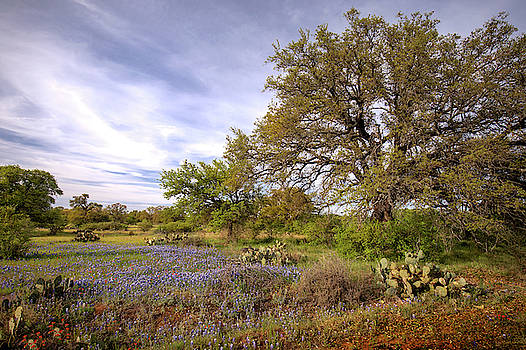 Texas Landscape  by Harriet Feagin