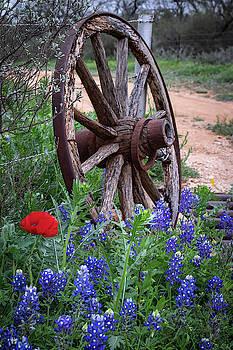 Texas Still Life  by Harriet Feagin