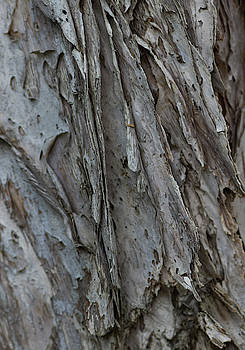 Textured Bark by Tania Read