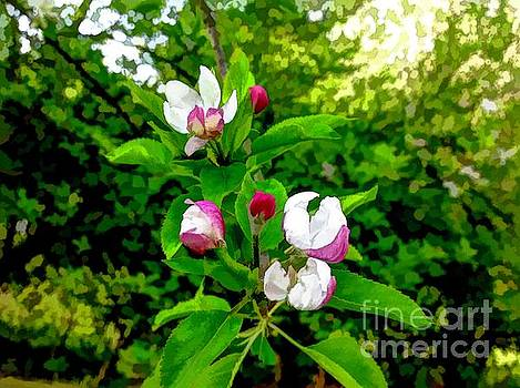 Thank You Father For Apple Blossoms by Debra Lynch