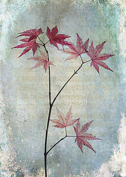 The Acer by Glenys Garnett