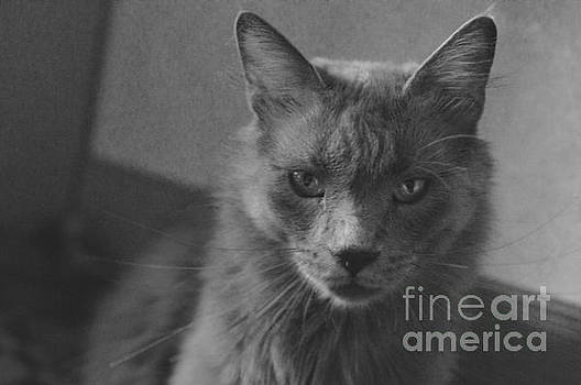 The angry cat - black and white by Yavor Mihaylov