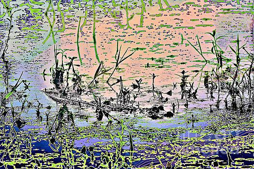 Diann Fisher - The Artful Swamp