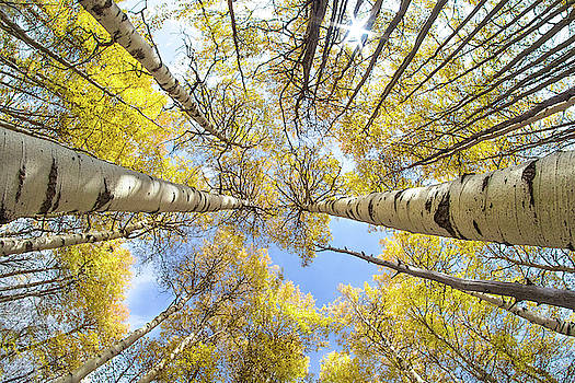 The Aspens by Jackie Novak