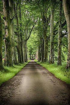 The Avenue of Trees by Alan Campbell