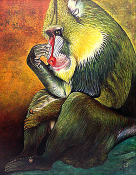 The Baboon by Jackie Nourigat