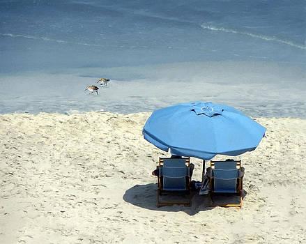 The Beach Life by Sandi OReilly