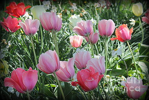 The Beauty of Spring - Tulips in Shades of Pink by Dora Sofia Caputo Photographic Design and Fine Art