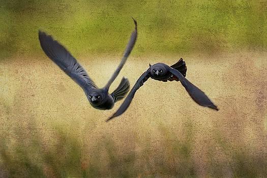 The Birds Approach by Debra Martz