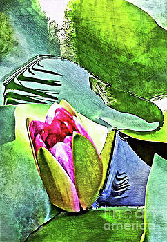 The Birth Of A Lily  by Margaret Koc