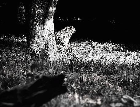 The Cheetah by Jaroslav Buna