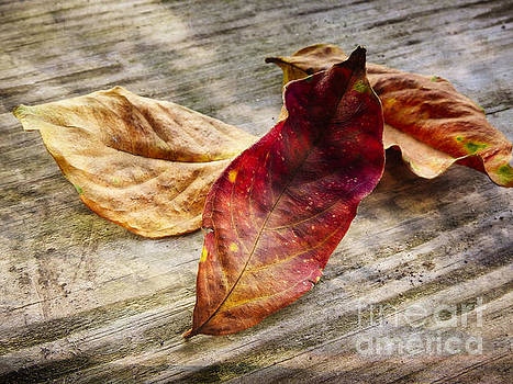 the Color of Fall by Ella Kaye Dickey