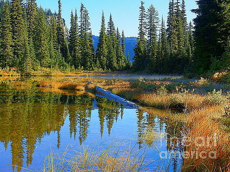 The Countless Stories Of Nature Reflection Lakes Mount Rainier National Park by Art Sandi