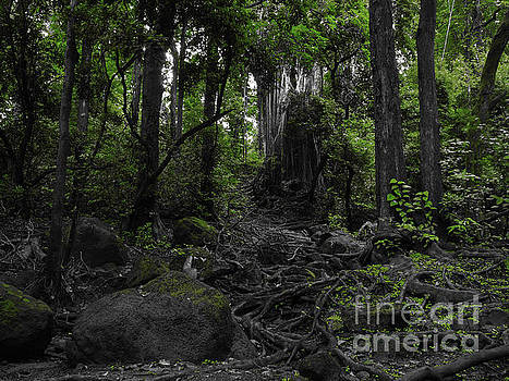 Asia Visions Photography - The Dark Forest