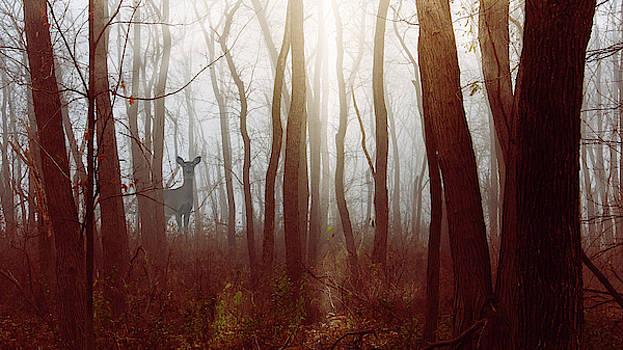 The Deer in the Fog by Joni Eskridge by Joni Eskridge