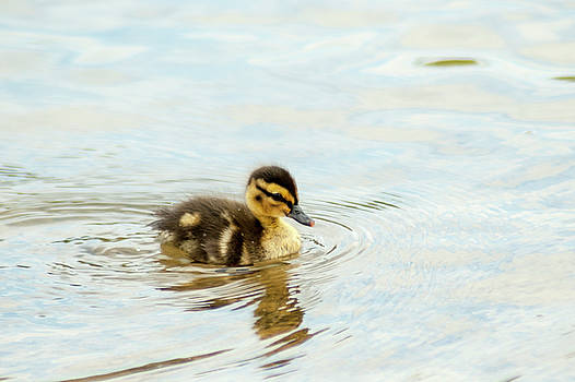 The Duckling by Annette Persinger