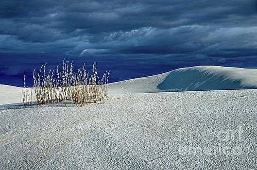 The Dunes by Stephen Whalen