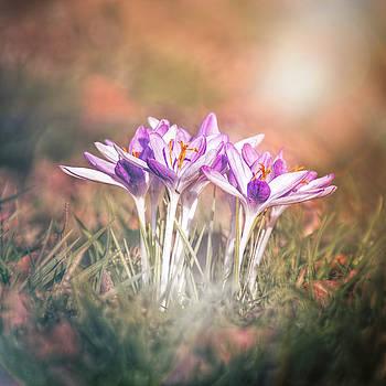 Blooms of Earth by Jaroslav Buna