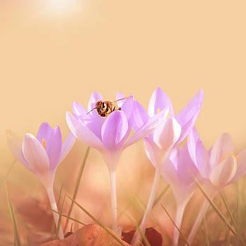 The Earth Blooms by Jaroslav Buna
