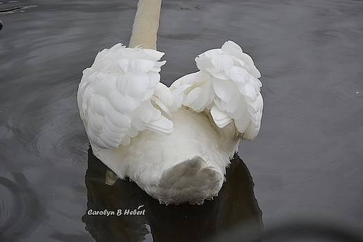 The End - Swan Turned to Say No More Photos by Carolyn Hebert