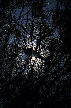 Jonny Jelinek - The Enlightened Dove