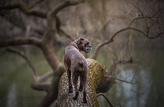 The Explorer by Tamas Szarka