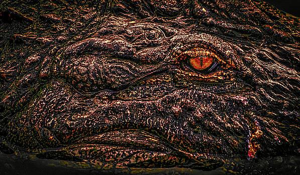 The Eye by Jeffrey Klug
