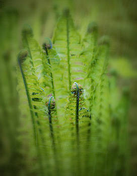 The Fern Unrolling by Alan Campbell